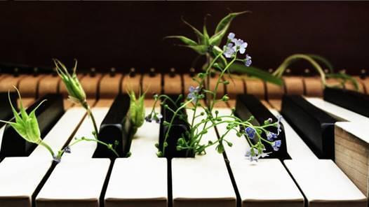 La-música-y-las-plantas